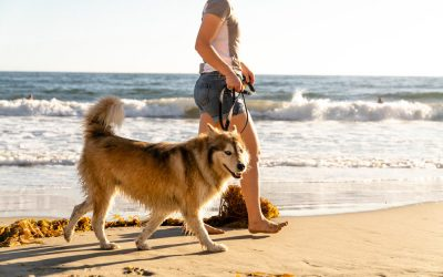 Protecting Your Pet from CommonChoking Hazards