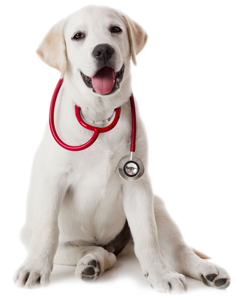 Doctor-Puppy
