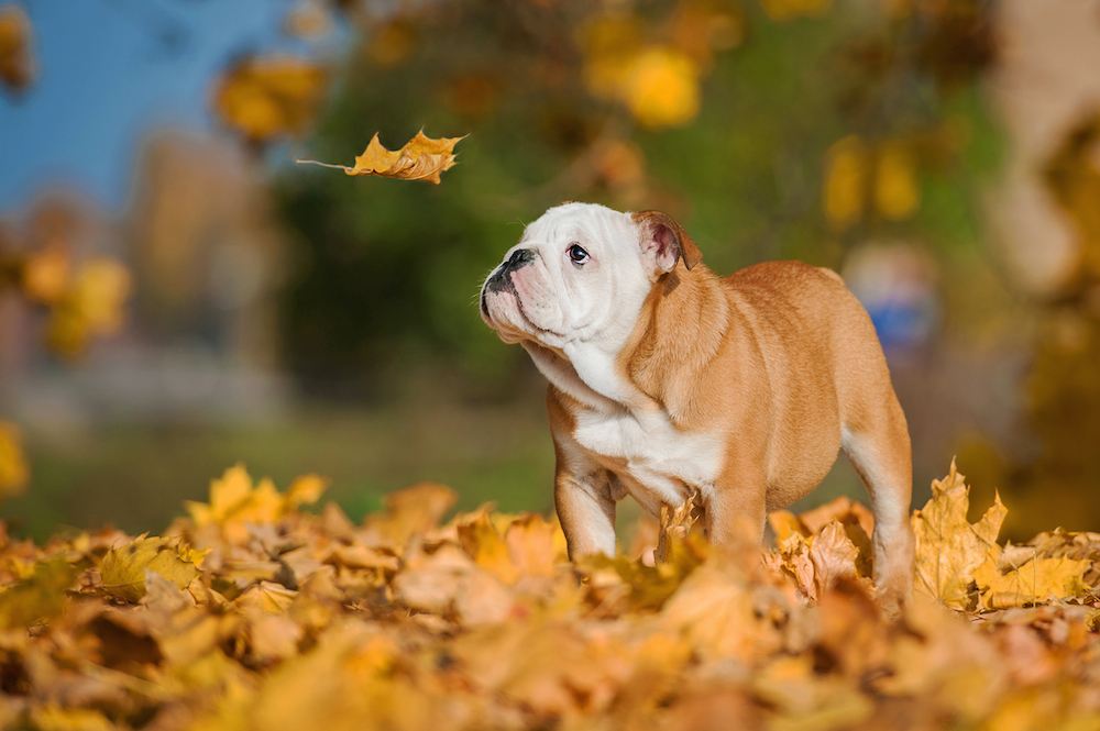 Top Fall Pet Safety Tips