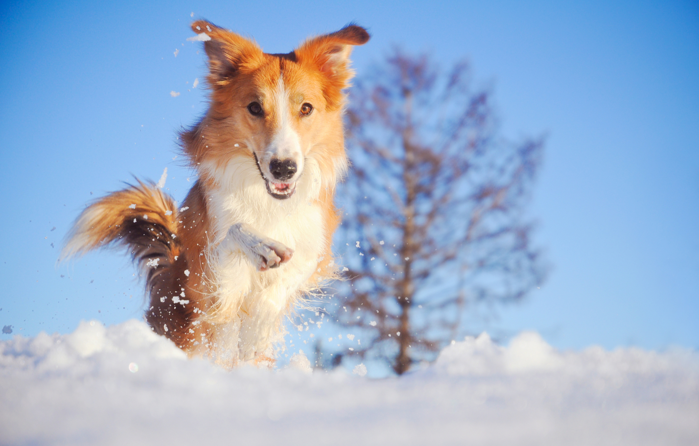 Winter Tips to Protect Your Dog from the Rain and Snow