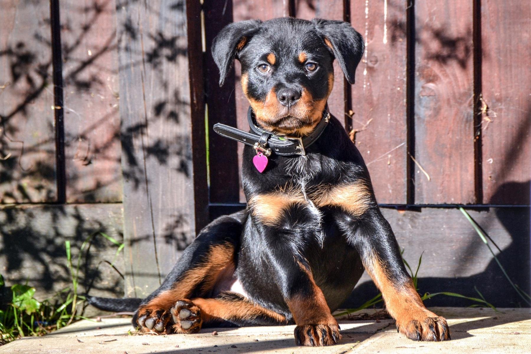 Puppies and Parvo: What Every New Puppy Owner Should Know