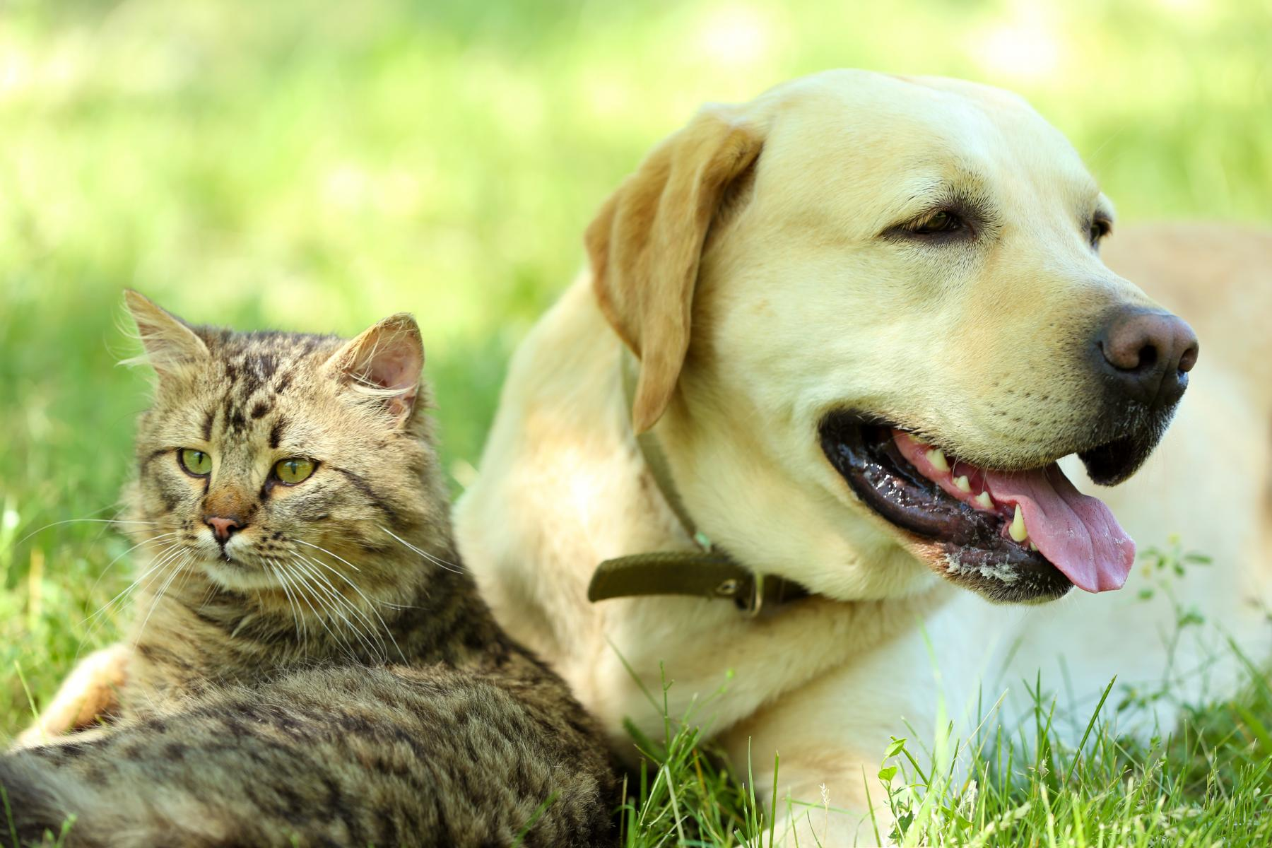 7 Simple Ways to Go Green with Your Pets