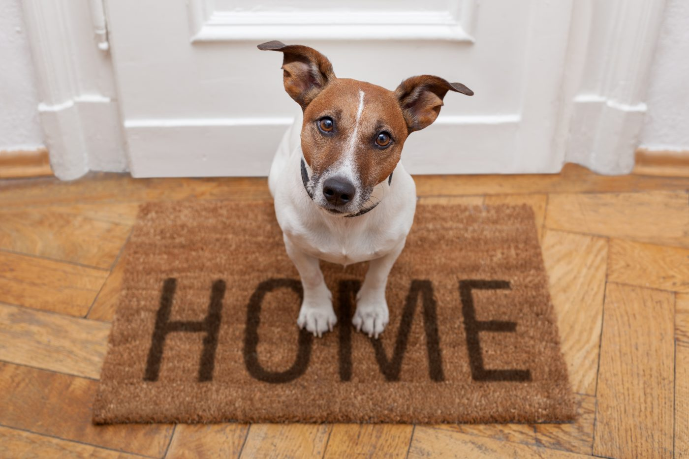 Make Reunification Easy: Update Your Pet's Microchip