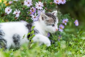 How to Keep Cats Safe Outdoors