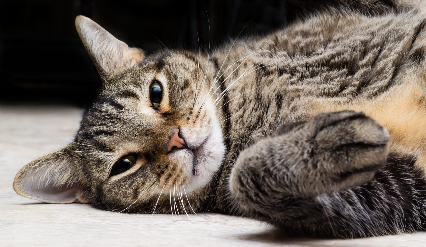 7 Tips for Keeping Your Cat's Weight Under Control