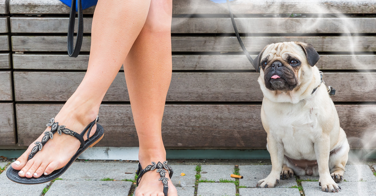 Vaping Products Pose Severe Risk to Pets