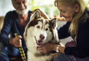 Answers to questions about pet lymphoma cancer