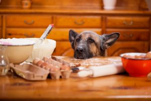 10 foods that dogs and cats should not eat