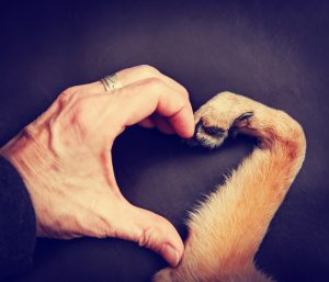 Signs Your Pet May Have Heart Disease
