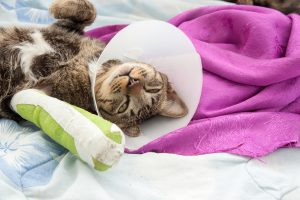 cat-broken-bone-Sage-Centers-For-Veterinary-Specialty-and-Emergency-Care